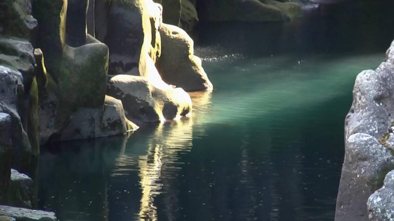 Живой водопад обои на рабочий стол скачать бесплатно 3